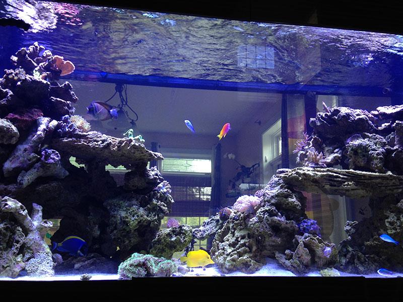 Home Armco Aquariums Serving Philadelphia Wilmington