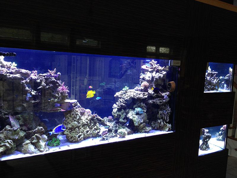 Home - Armco Aquariums Serving Philadelphia, Wilmington, DE, PA, NJ, MD