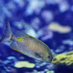 philadelphia aquarium service