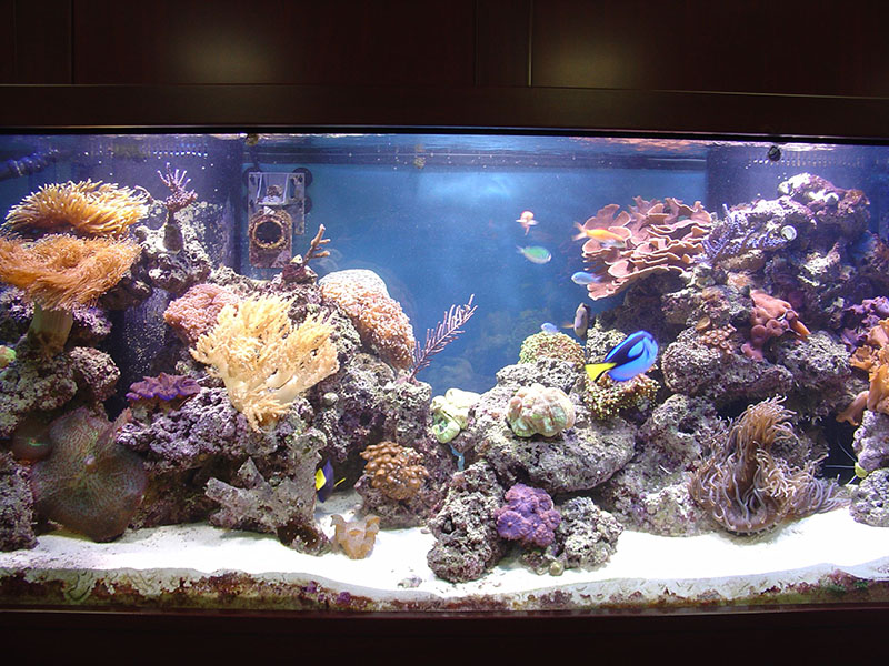 Commercial Offices Armco Aquariums Serving Philadelphia