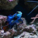 Moving? Armco Aquatics Provides Superior Aquarium Relocation Services