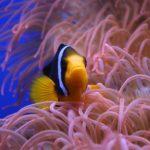 main line aquarium service