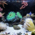 custom aquarium near me