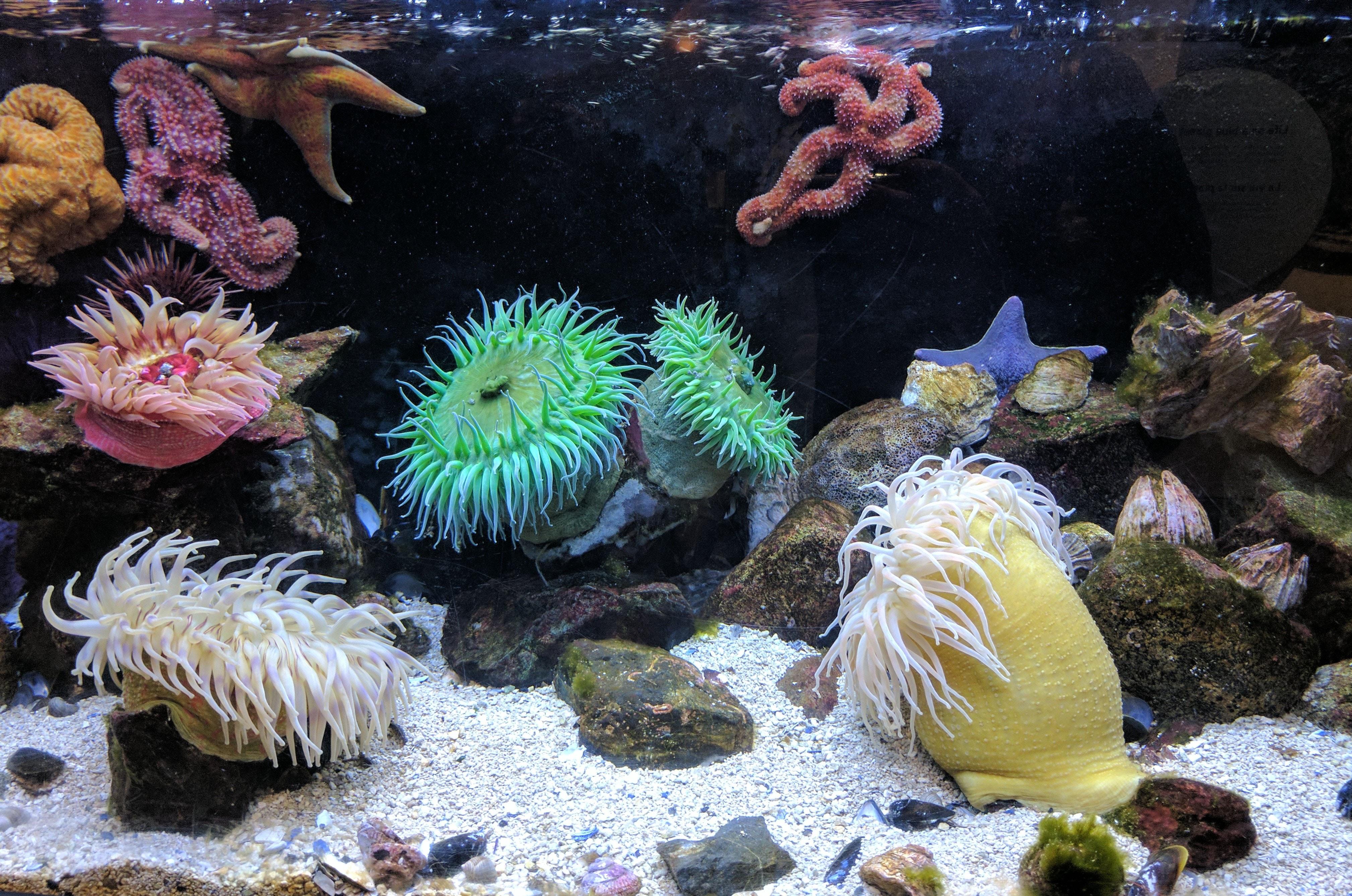Custom Aquarium Designs Armco Aquatics