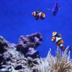 Expert Aquarium Installation in Philadelphia with Armco Aquatics