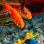 4 Tips to Keep Your Philadelphia Aquarium Running | Armco Aquatics