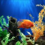 Philadelphia custom aquarium