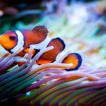 aquarium designer Pennsylvania Delaware