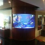corner fish tank