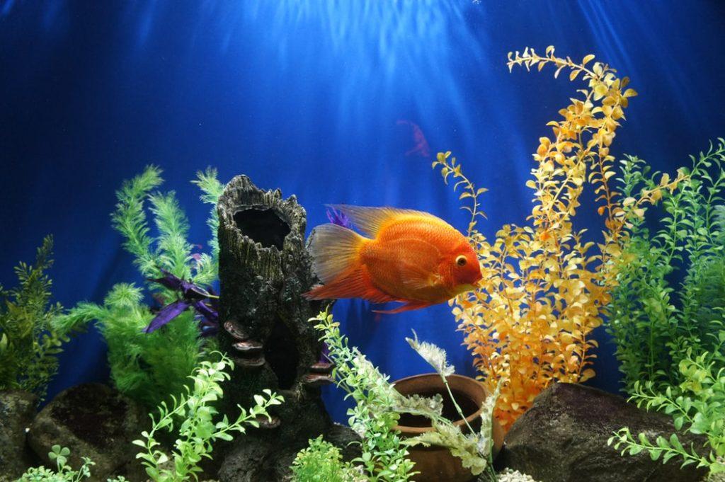custom build fish tank