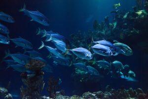 commercial aquarium cleaning