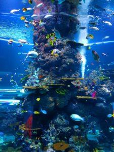 fish tank maintenance service