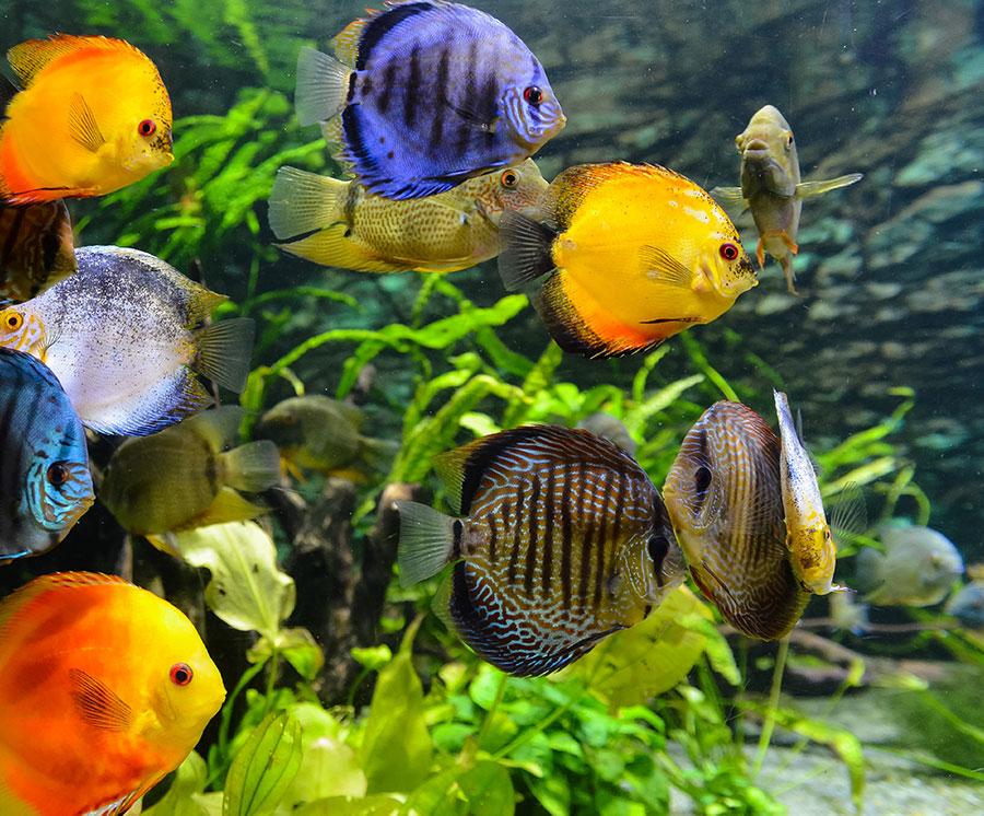 A custom aquarium can elevate any room