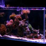 custom aquarium main line