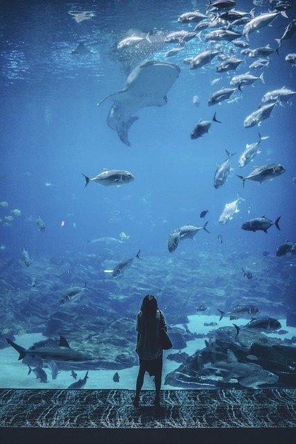 aquarium maintenance philadelphia